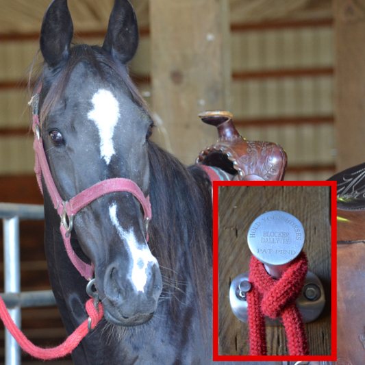Solid Aluminum Construction Permanent Solid Mounting Hang Hats, Jackets, Horse Tack & Ropes 2 Hold Levels Buy 4 Get 1 Free & Free Shipping