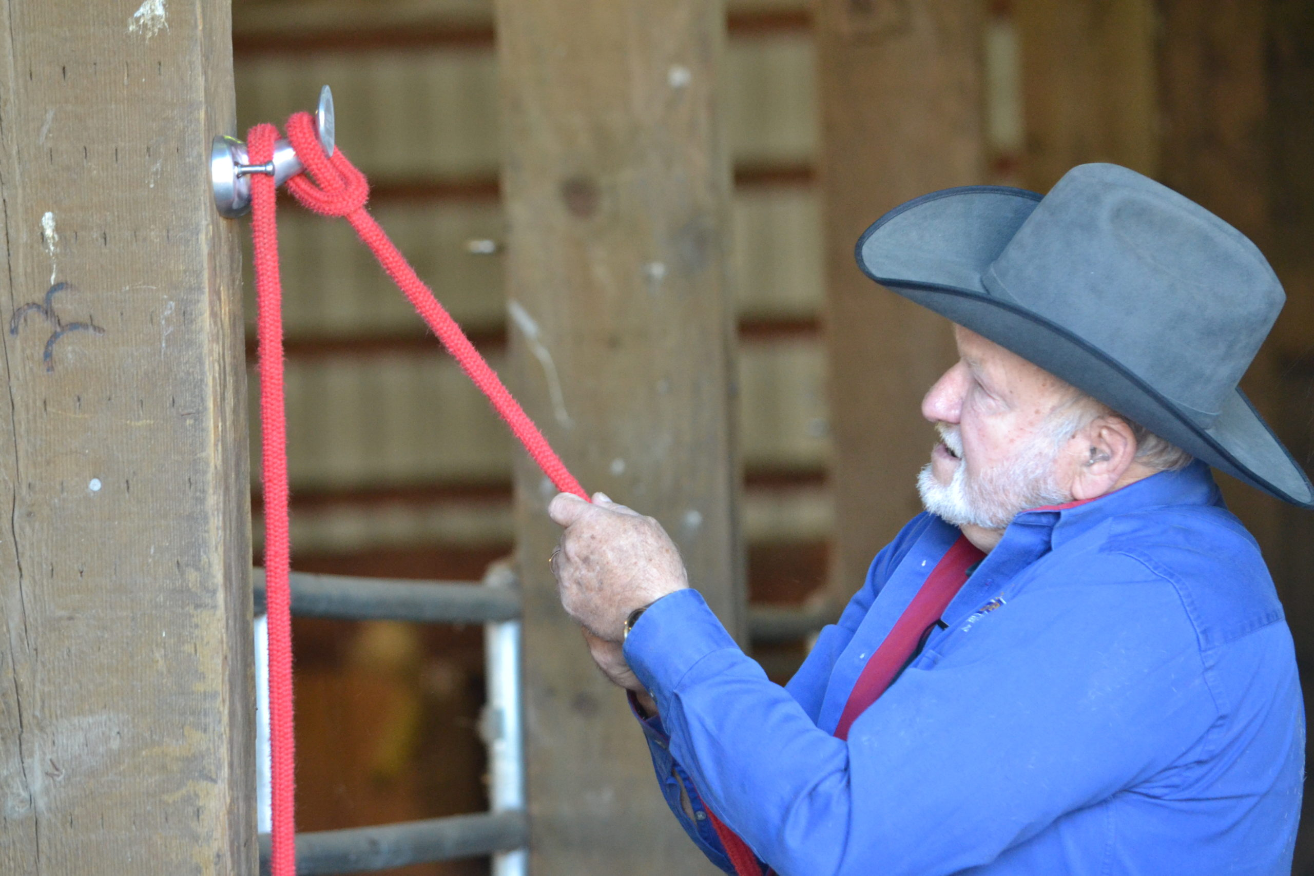 3.  Finally pull down on the horse end of the lead rope to secure it and feel the hold your rope creates.  Different lead ropes will have different levels of hold depending on the material and condition.